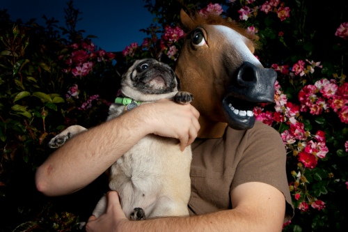 Just horsing around. Photo: flickr/pkmousie